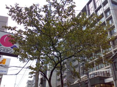 hanamizuki01.jpg
